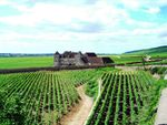 « Les exportations de vin de Bourgogne dopées par le Brexit !! »