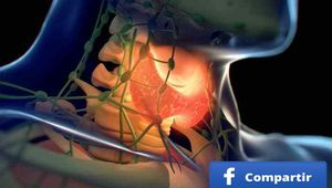 Los 12 peores disruptores endocrinos para nuestro organismo y nuestra salud