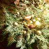 Noël, etc....