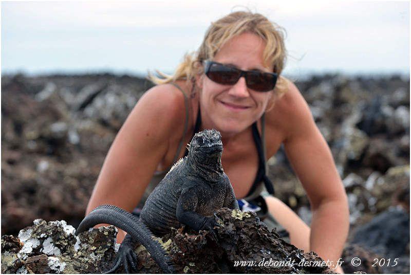 La faune des îles Galápagos est restée peu farouche du fait d'une installation tardive des hommes et de la protection dont elle bénéficie aujourd'hui.
