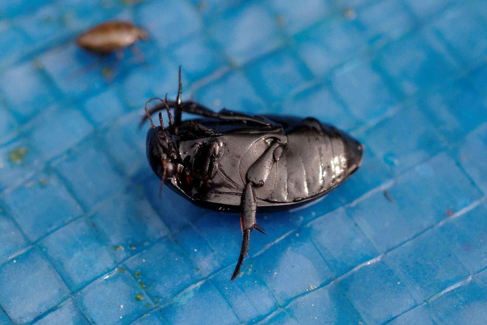 23 - Des insectes dans nos jardins (Côte d'Or - 21)