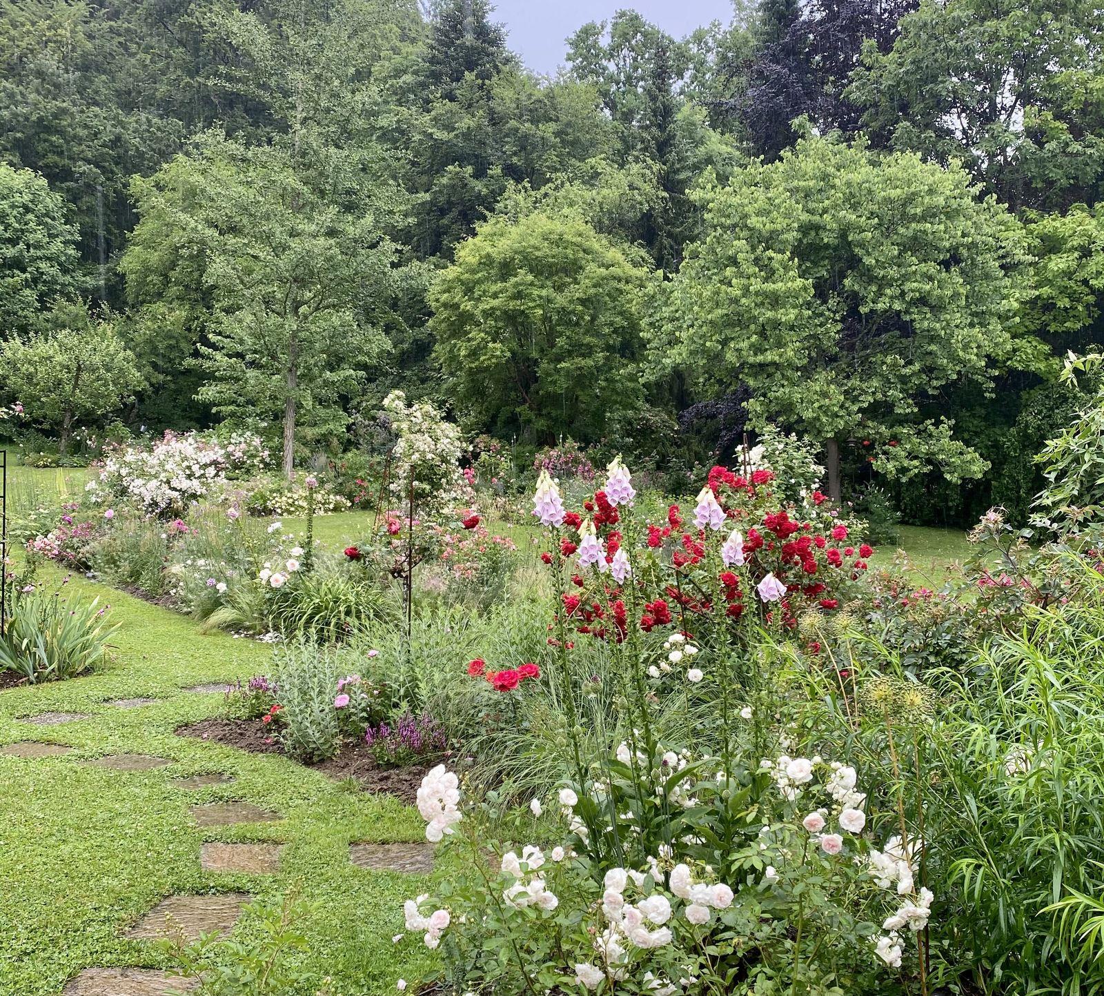 Une roseraie à l'orée des bois - Luxembourg