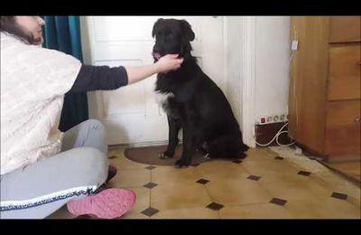 Dernière étape du rappel: prendre son chien par le collier