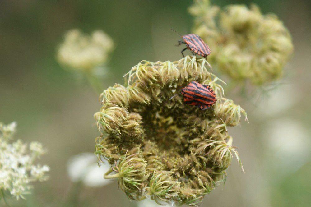 les photos des plantes que je vois au fur et à mesure de mes balades