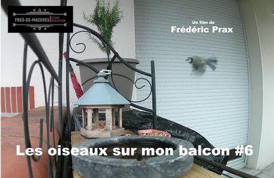 Bande annonce Les oiseaux sur mon balcon #6...