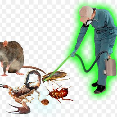 Hire Hawx Pest control Service and get rid of pests and bugs