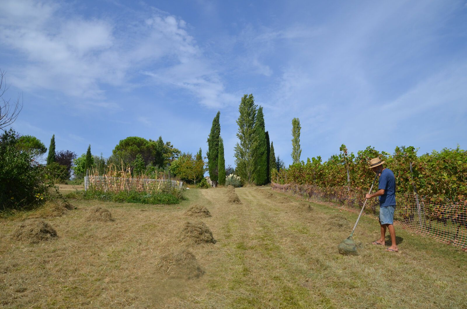 Domaine Les Cyprès - Potager - Vignes - septembre