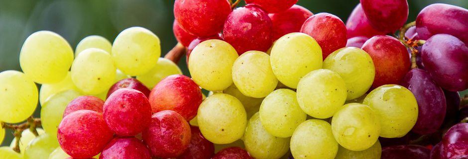 Détox : La cure de raisin, C'est le moment !