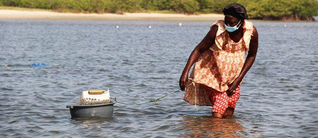 Une initiative de réhabilitation des mangroves redonne espoir aux populations du delta du Saloum au Sénégal