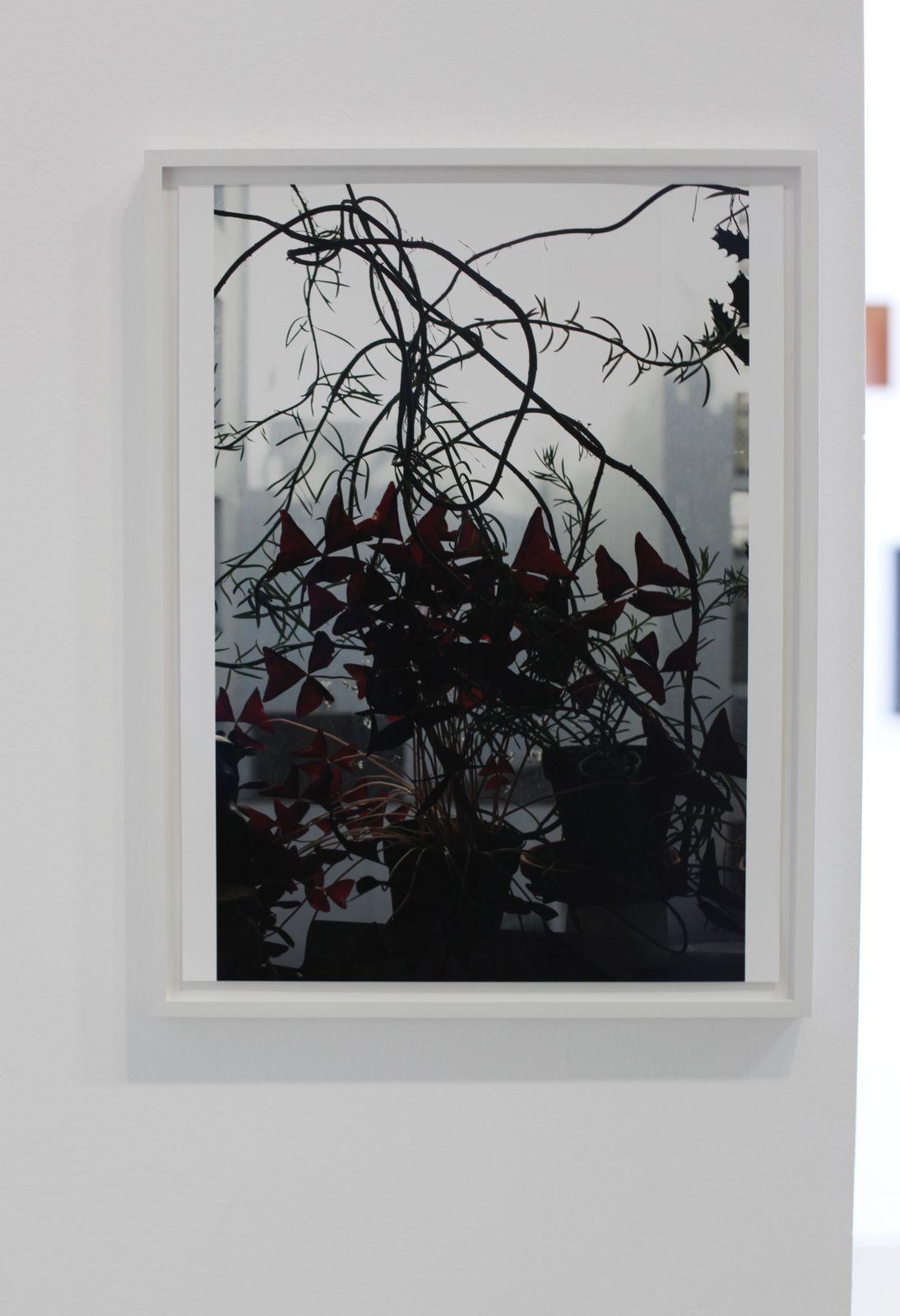 """""""Escape into Space"""", 2020 de Wolfgang TILLMANS - Courtesy de l'artiste et de la galerie Crousel © Photo Éric Simo"""