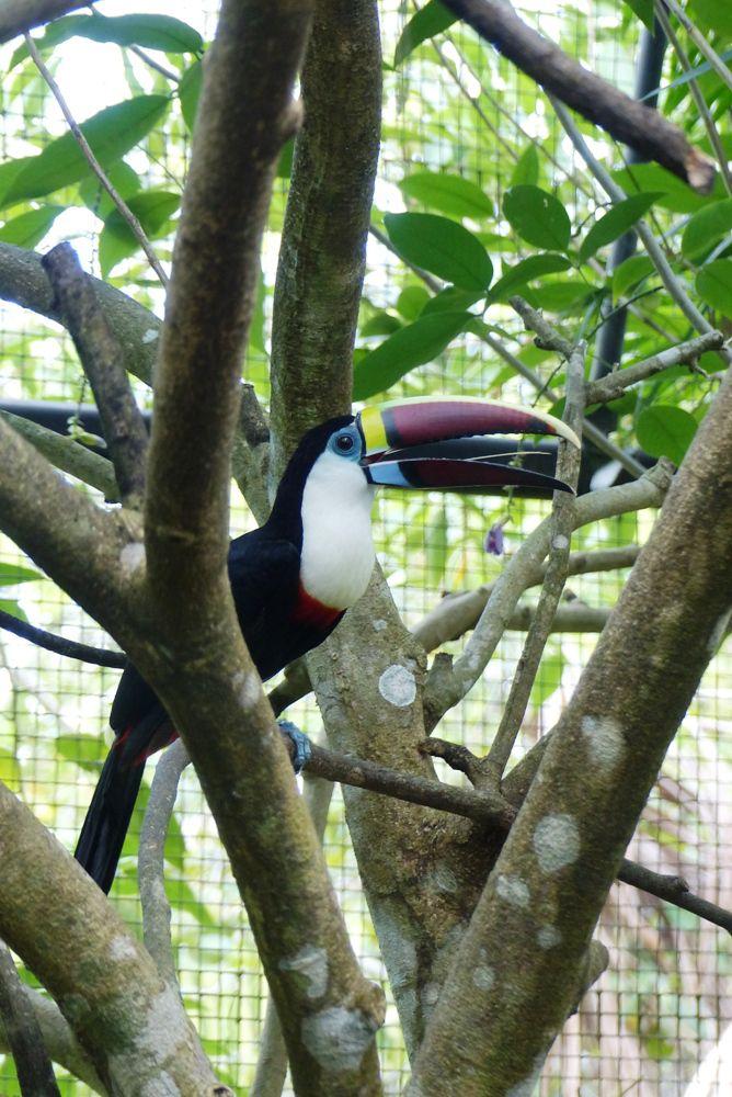 Au zoo de Macouria