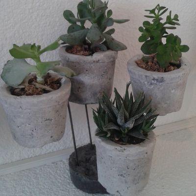 plantes en lévitation