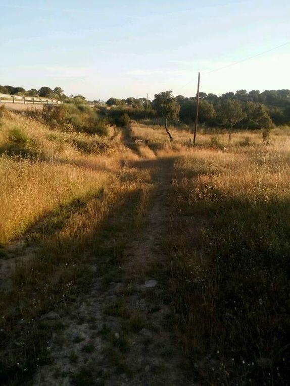 Pont romain de Casa de San Antonio et chemin herbeux.