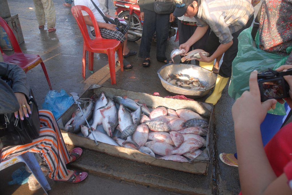 The fish market of Kompong Luang