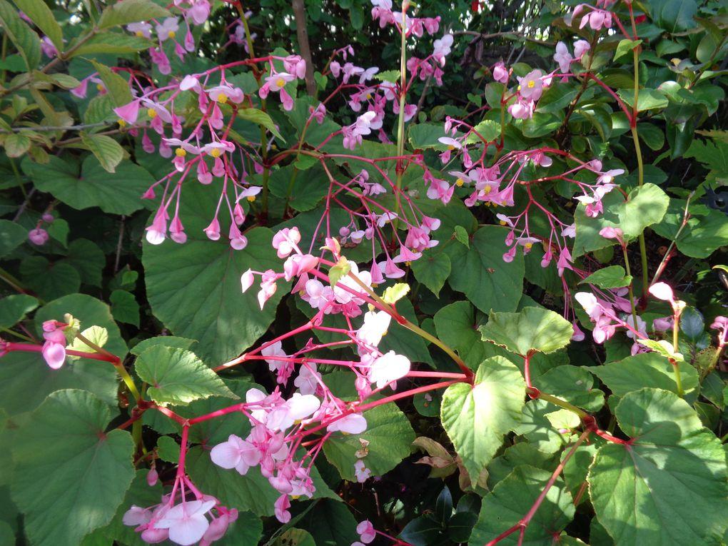 Mon jardin Le Clos fleuri en septembre 2021