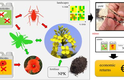 Bee pollination outperforms pesticides for oilseed crop production and profitability