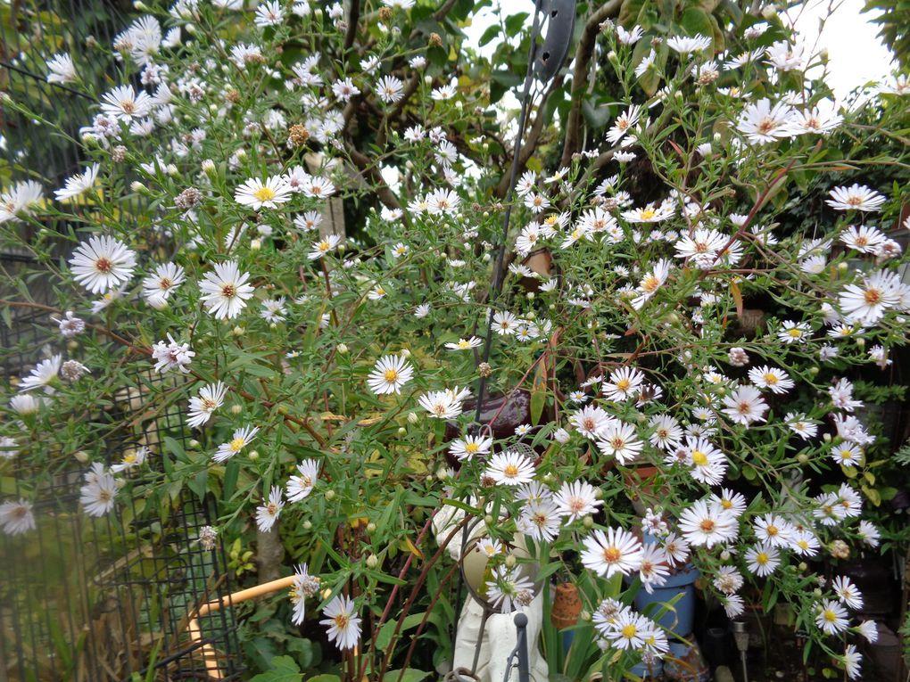 """Mon jardin """"Le Clos fleuri """" en octobre"""