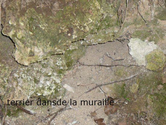 Album - La-Grotte-de-la-Thuriere