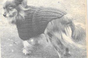 manteau tricoté pour petit chien