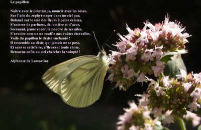 Le papillon, Alphonse de Lamartine, Nouvelles méditations poétiques, 1823