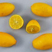 Un nouvel agrume, le lemonquat