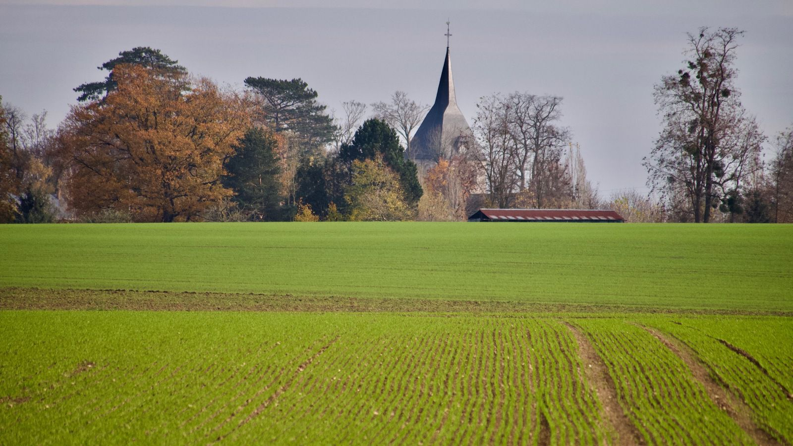 Notre-Dame de Montaure, émergeant de l'horizon, et son clocher romand du XIe siècle qui rassembla durant longtemps les hameaux de Montaure et de Tostes (photographie de Frédéric Ménissier datant de novembre 2020).