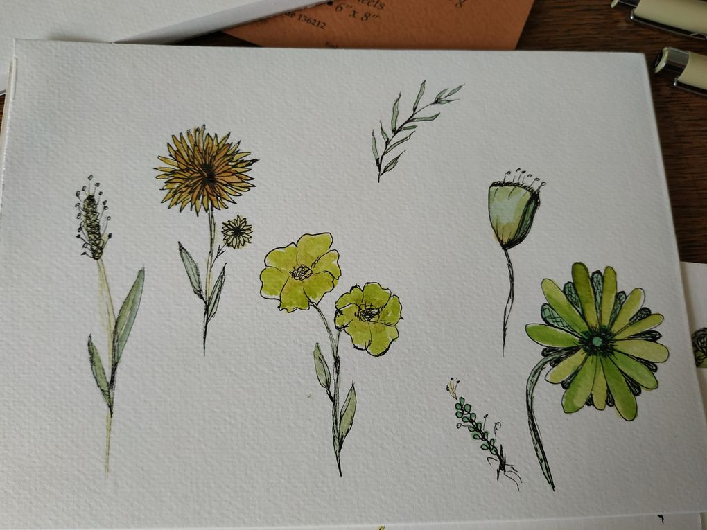 fleurs : dessin et aquarelle