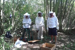 du miel au jardin vagabond !