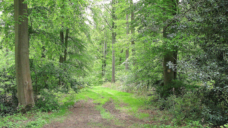 la Route de la Trouée des Bonshommes