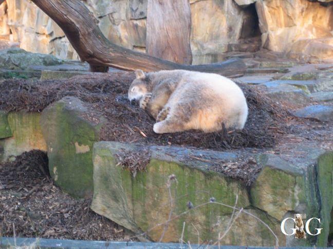 Erinnerung an Knut September 2007