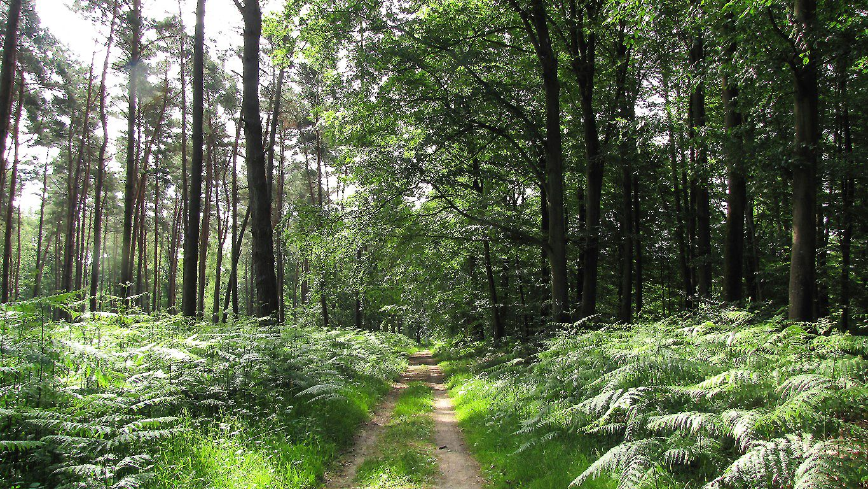 carrefour_Chemin du Fau Bidaud_Route du Petit Octogone