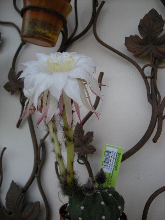 Album - Fleurs-et-plantes-perso