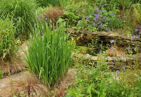 Promenade au jardin : la fontaine
