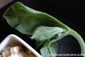 Petit tour de légumes et fruits oubliés ou qu'on oublie par le colibri