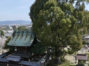Préf. de Nara: Yamato-koriyama, son château et ses poissons rouges