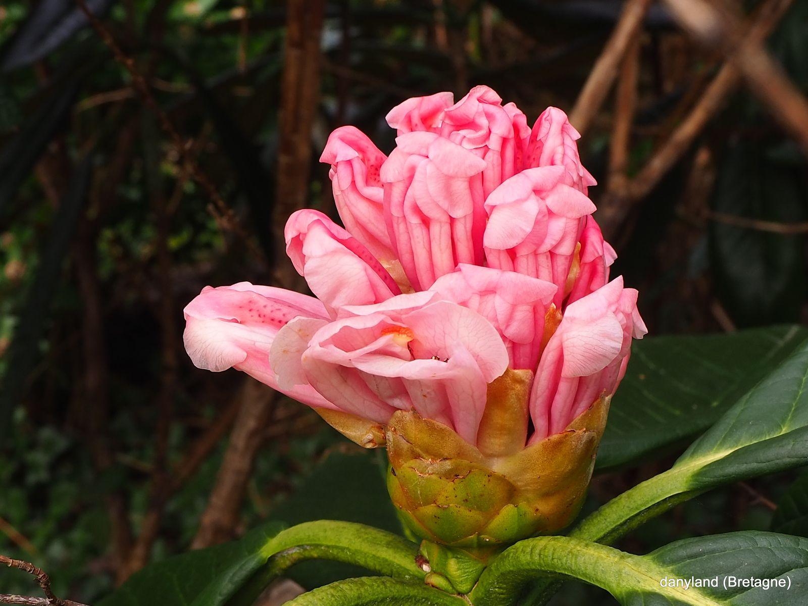 fleurs de toute beauté !!!