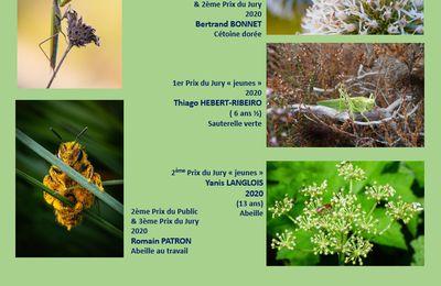 """J-8 pour le Concours Photos """"Insectes de France 2021"""""""
