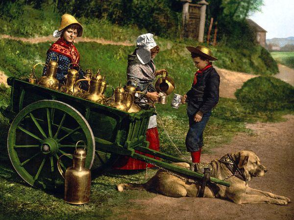 Les  voitures de transport du lait ; laitières,….