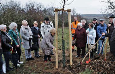 Veitshöchheimer Eigenheimer pflanzten am Jahresbaumweg eine Flatterulme, den Baum des Jahres 2019 -  Gespendet von Helga Wahler für den Schülerjahrgang 1940
