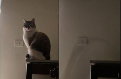foto di gattototò