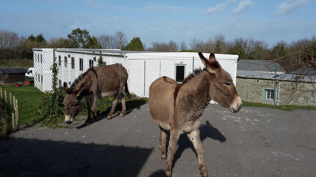 Eco-Pâturage Au Fort des Couplets - Les animaux sont arrivés