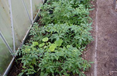 Jungpflanzen für den Garten abzugeben
