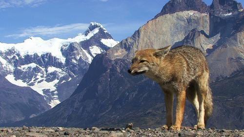 Patagonie : Torres del Paine