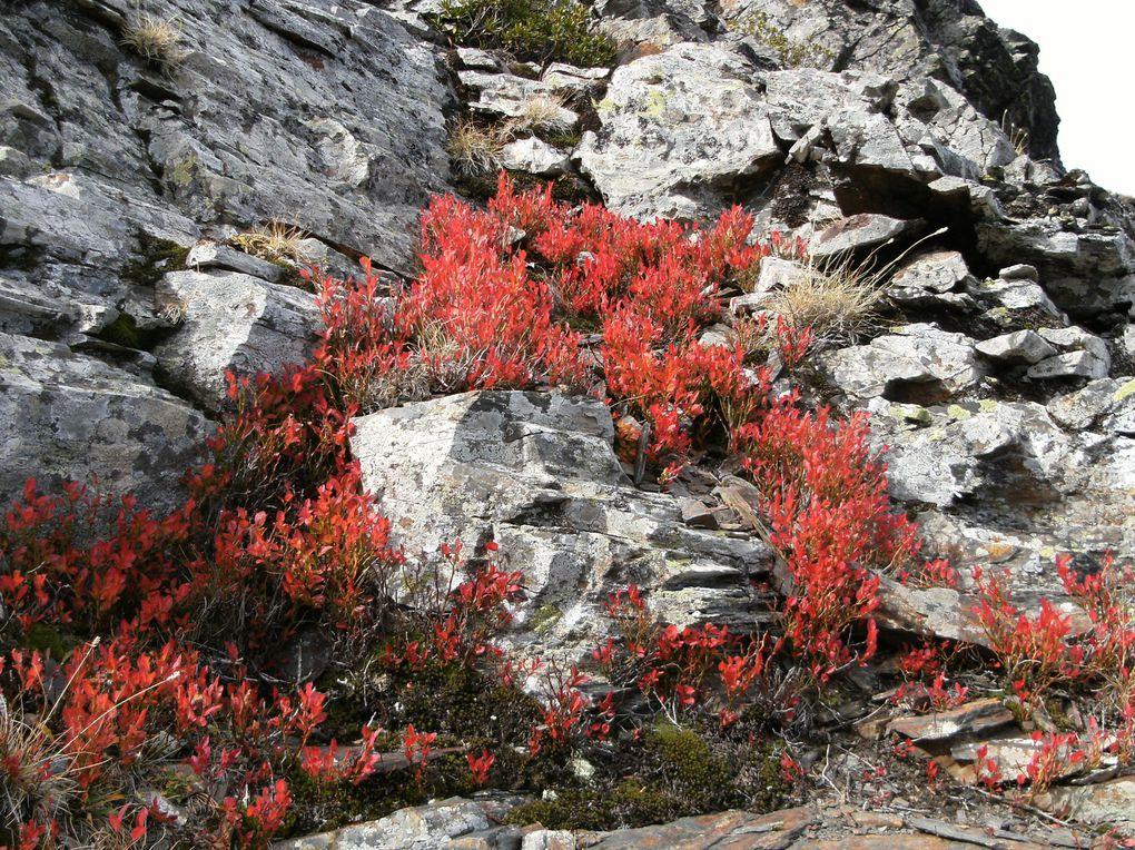 La Nature change de couleurs...du jaune au rouge flamboyant