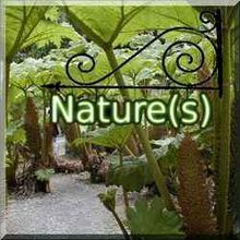 Sept. 2010 - Les CHAMPIGNONS - votre sujet préféré sur NATURE(S)! - Top 10