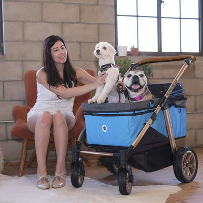 Pet Strollers: Transform the Life of You and Your Beloved Pet
