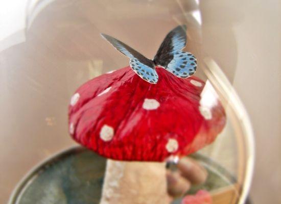 champignon sous cloche