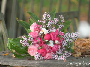 Dernières roses d'automne