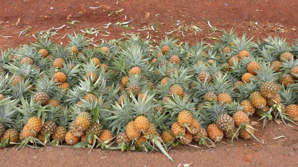 Imágenes de Garoua-Boulai, Cameroun.- El Muni.