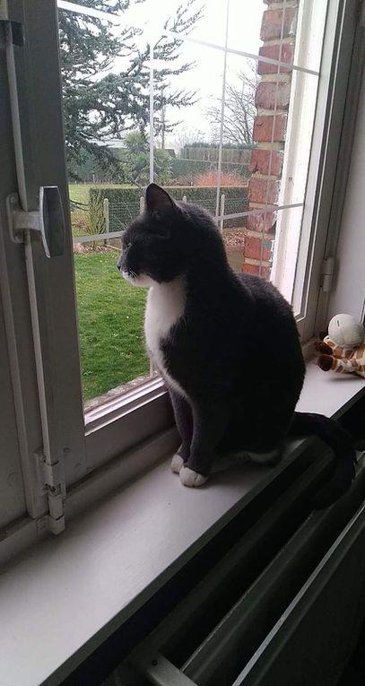 Elle est adoptée !!! : PUPUCE, ravissante et très gentille chatte stérilisée d'1 an